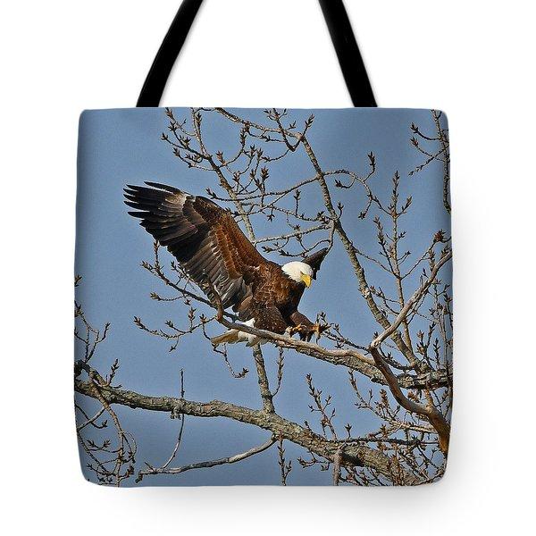 Bald Eagle Landing Tote Bag