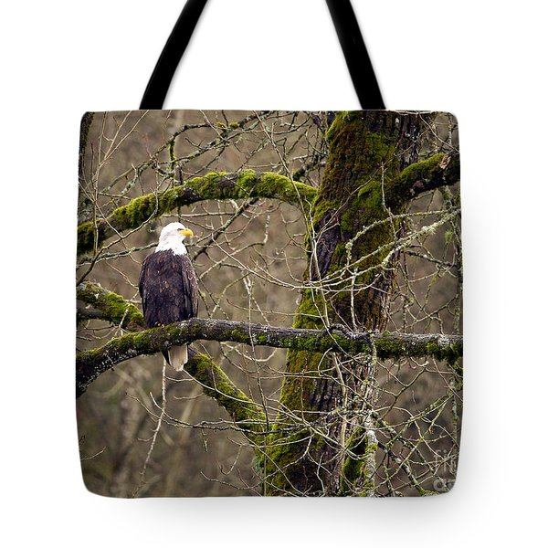 Bald Eagle On Mossy Branch Tote Bag by Sharon Talson