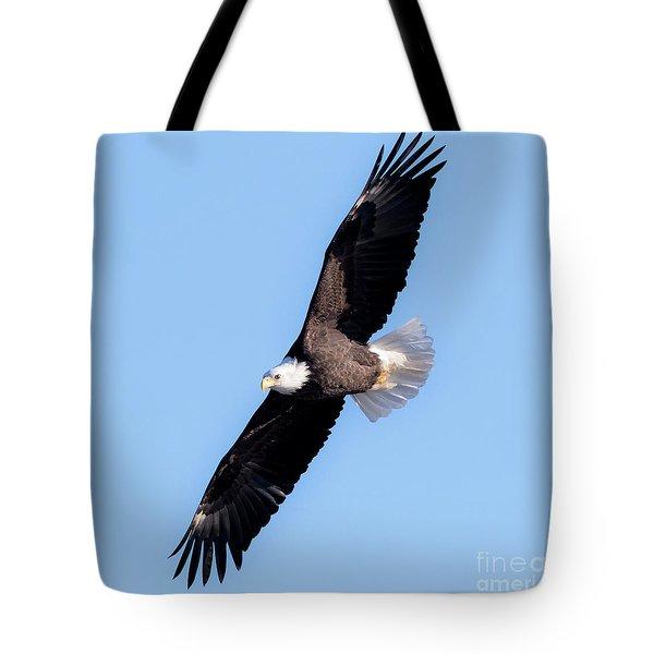 Bald Eagle Overhead  Tote Bag by Ricky L Jones