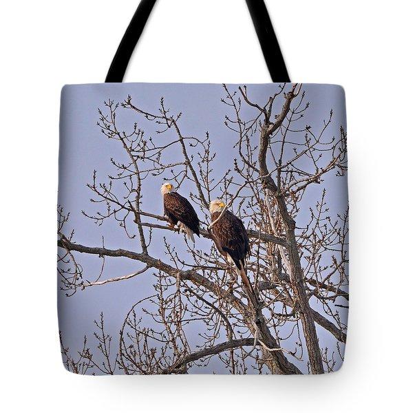 Bald Eagle Pair Tote Bag