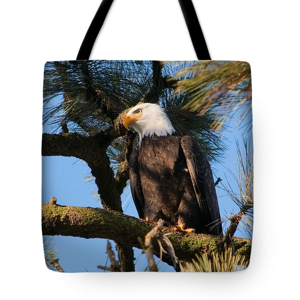 Bald Eagle Perch Tote Bag