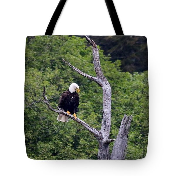 Bald Eagle Perched In Tree Tote Bag by Christy Pooschke