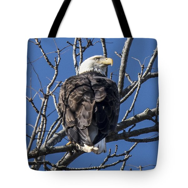 Bald Eagle Perched Tote Bag
