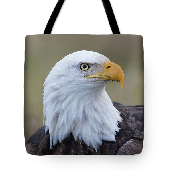 Tote Bag featuring the photograph Bald Eagle Portrait 2 by Angie Vogel