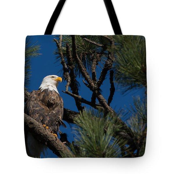 Bald Eagle Resting Tote Bag