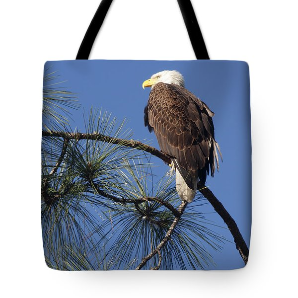 Bald Eagle Tote Bag by Sally Weigand