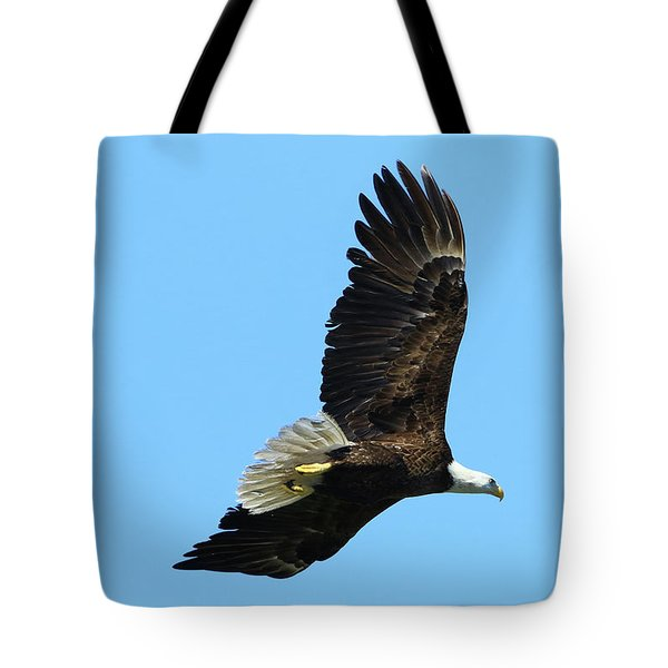 Tote Bag featuring the photograph Bald Eagle Series IIi by Deborah Benoit