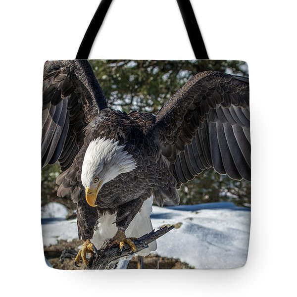 Bald Eagle Spread Tote Bag