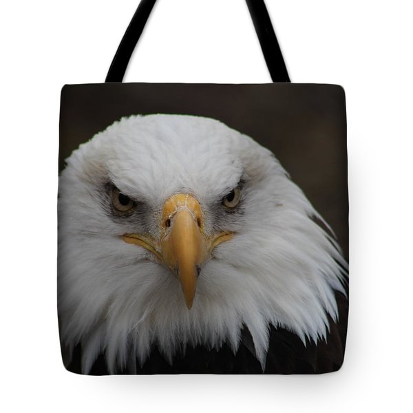 Bald Eagle Stare  Tote Bag
