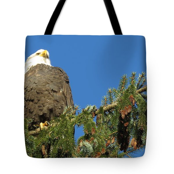 Bald Eagle Sunbathing Tote Bag