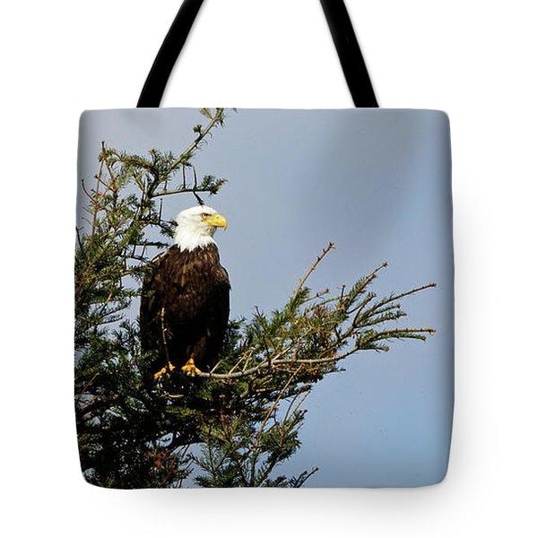 Bald Eagle - Taking A Break Tote Bag