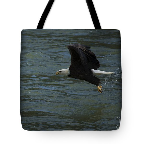 Bald Eagle With Fish In Claws Flying Over The French Broad River, Tennessee Tote Bag