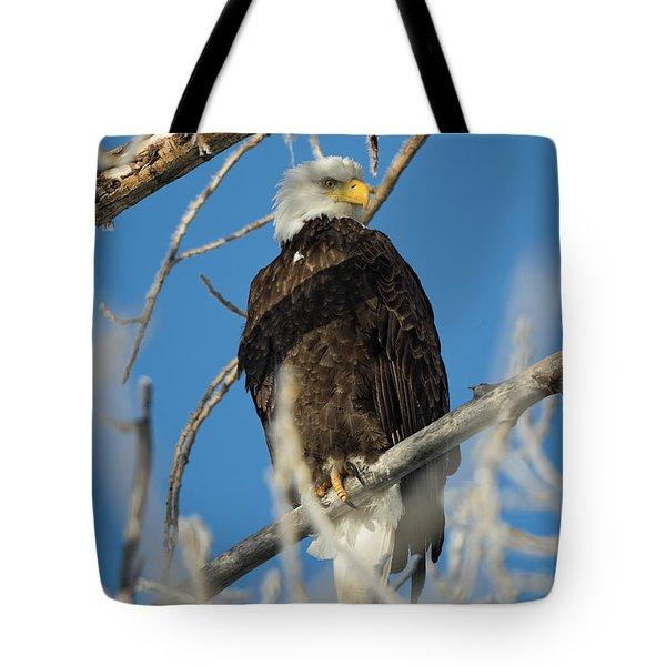 Bald Eagle With Pogo Nip Tote Bag