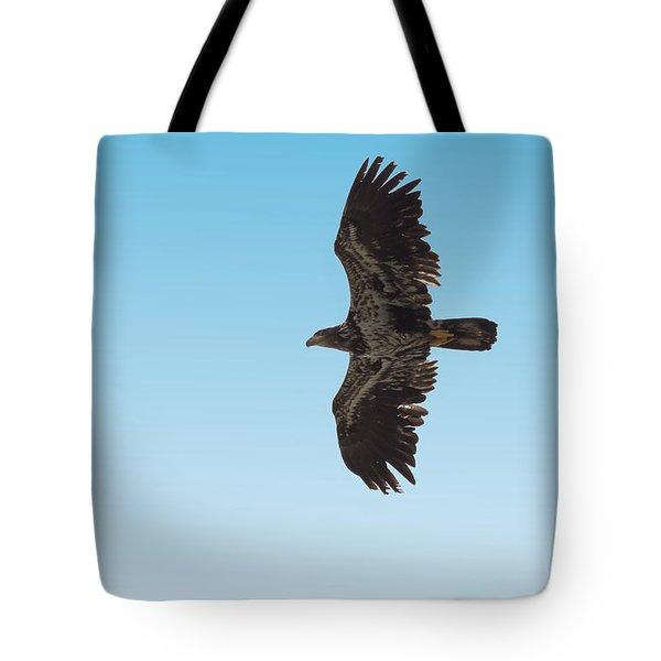 Bald Eaglet Tote Bag