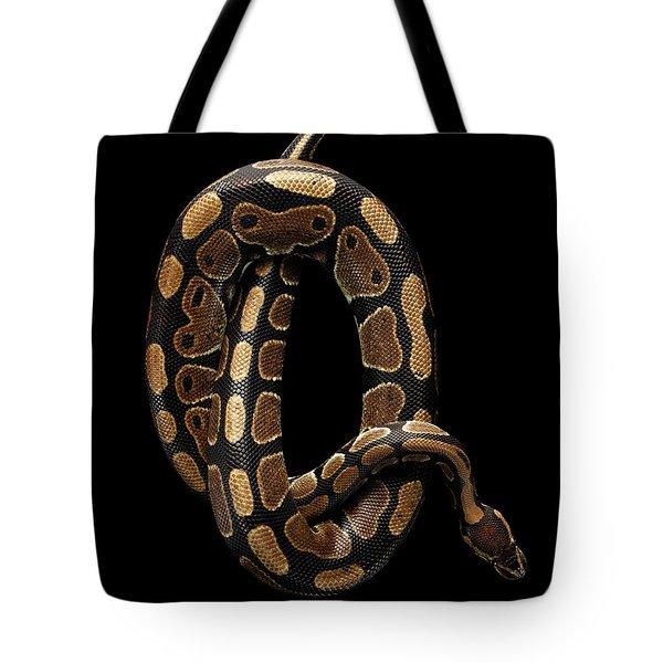 Ball Or Royal Python Snake On Isolated Black Background Tote Bag