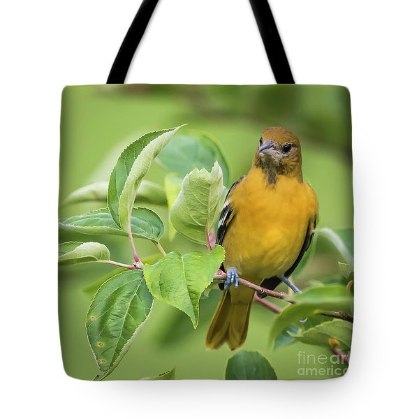 Baltimore Oriole Closeup Tote Bag by Ricky L Jones