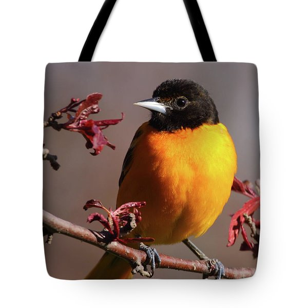 Baltimore Oriole II Tote Bag