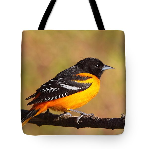 Baltimore Oriole IIi Tote Bag