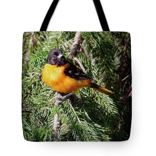 Baltimore Oriole In Blue Jay Country Tote Bag