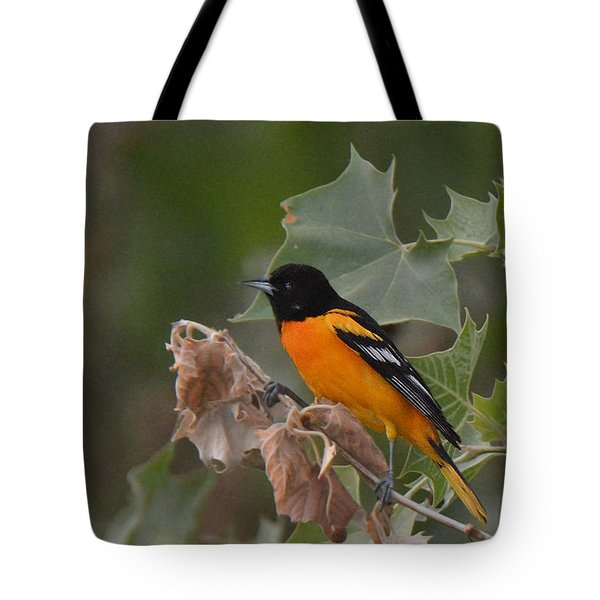 Baltimore Oriole In Sycamore Tree Tote Bag