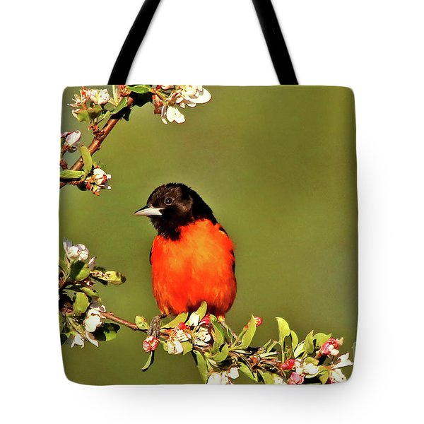 Baltimore Oriole Tote Bag by James F Towne
