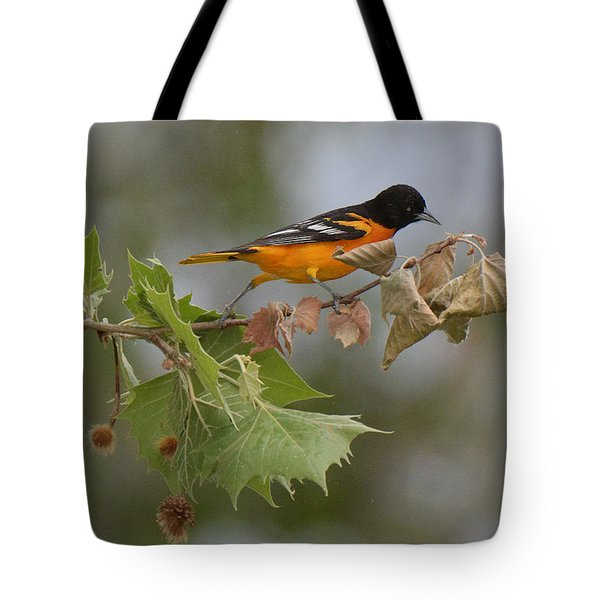 Baltimore Oriole Out On A Limb Tote Bag