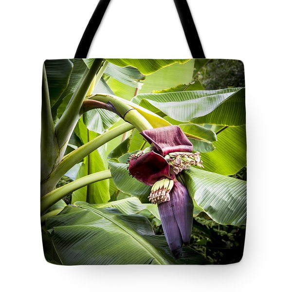 Tote Bag featuring the photograph Banana Beginnings Square by Kerri Ligatich