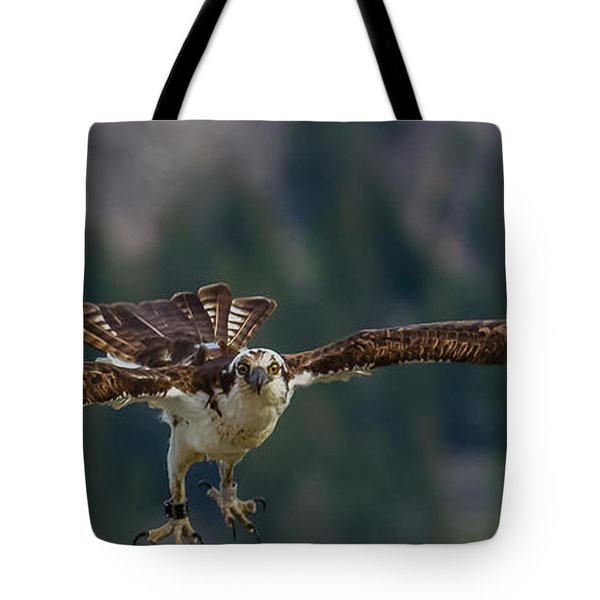 Tote Bag featuring the photograph Banded But Bold by Yeates Photography