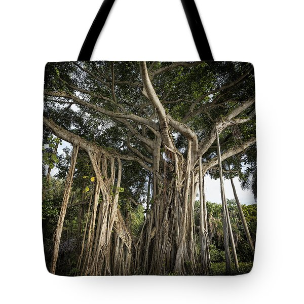 Banyan Tree At Bonnet House Tote Bag