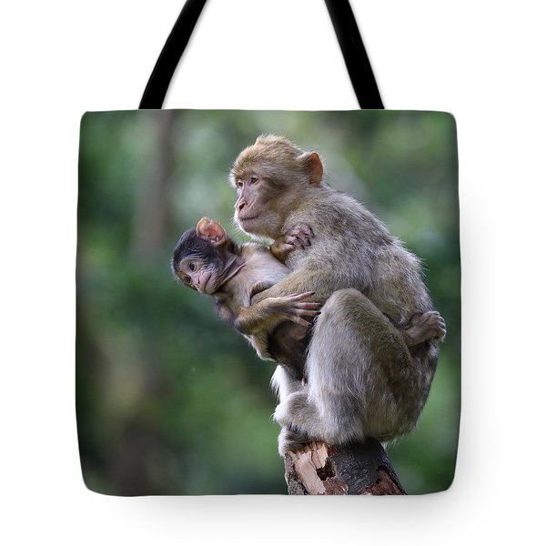Barbary Macaque Mother And Baby Tote Bag