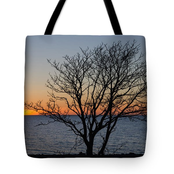 Bare Tree At Sunset Tote Bag