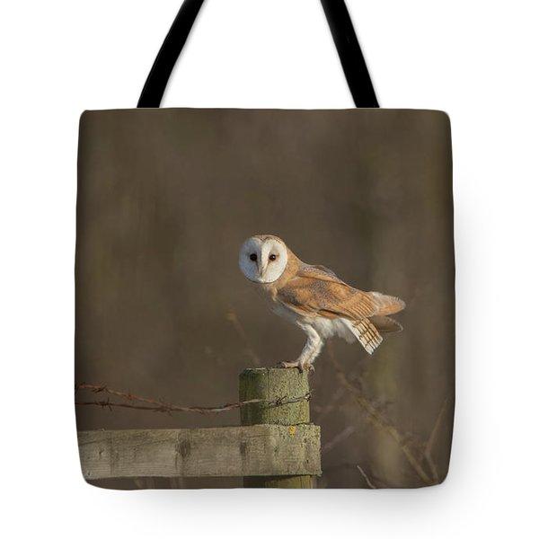 Barn Owl On Fence Tote Bag