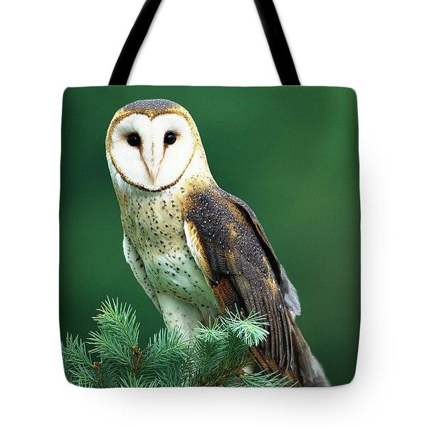 Barn Owl Tyto Alba Portrait, Hudson Tote Bag