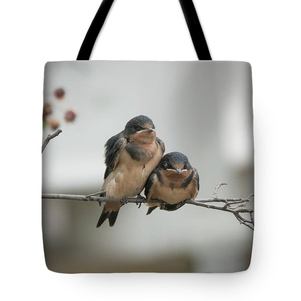 Barn Swallow Fledglings Tote Bag