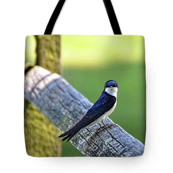 Barn Swallow Looking Angry Tote Bag