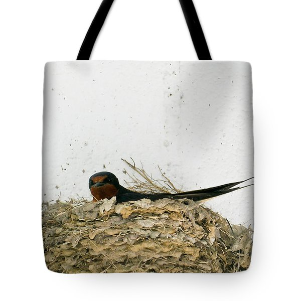 Barn Swallow Nesting Tote Bag by Douglas Barnett
