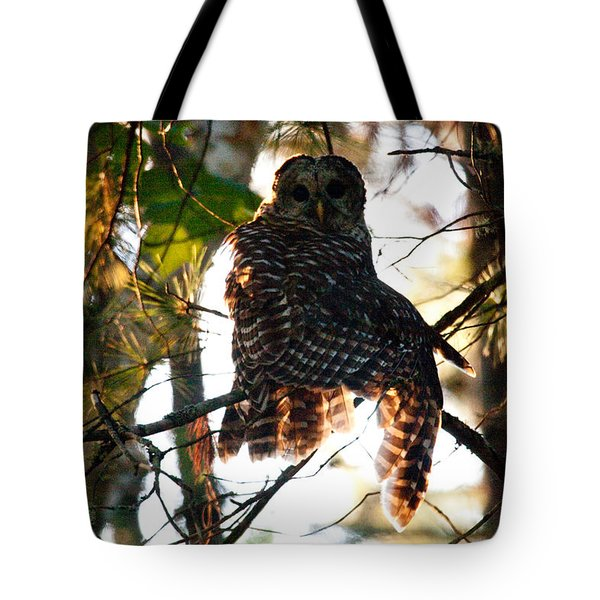 Barred Owl At Sunrise Tote Bag