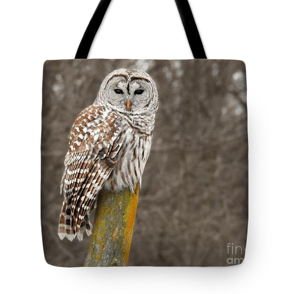 Barred Owl Tote Bag by Kathy M Krause