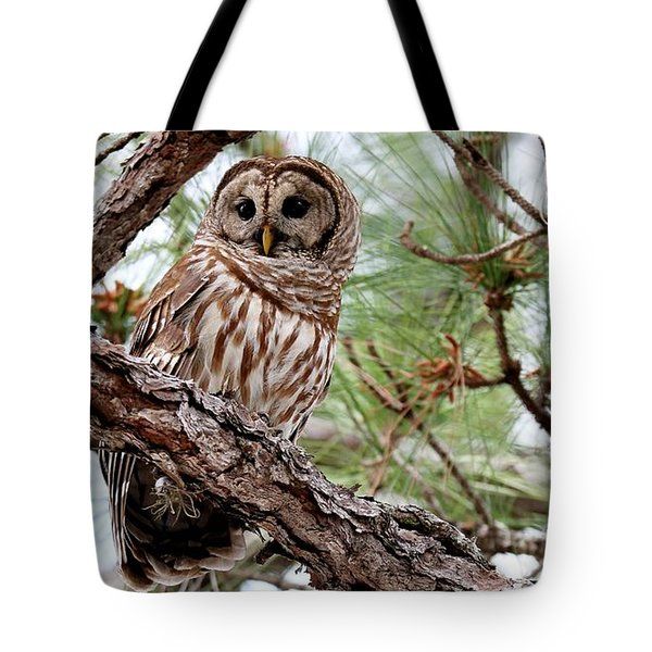Barred Owl On Tree Branch Tote Bag