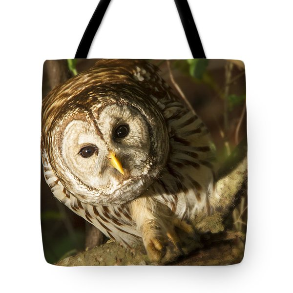 Barred Owl Peering Tote Bag
