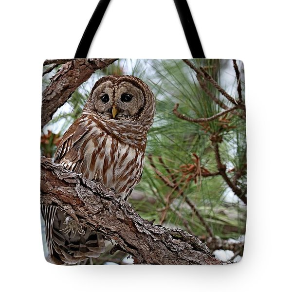Barred Owl Perched In Tree Tote Bag
