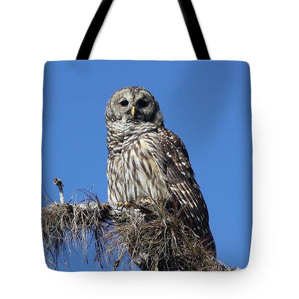Barred Owl Portrait Tote Bag