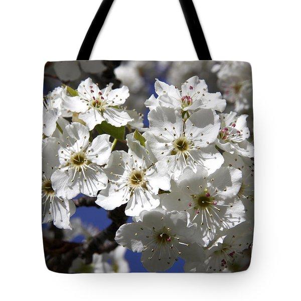 Bradford Pear Blossoms Tote Bag