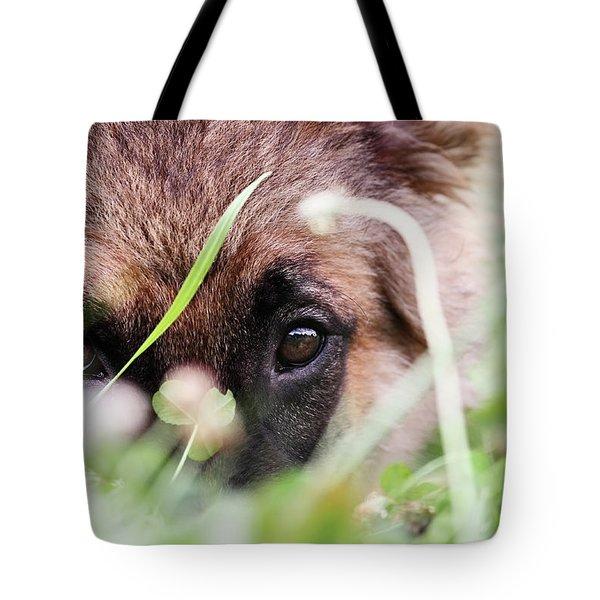 Bashful Tote Bag by Stephanie Frey