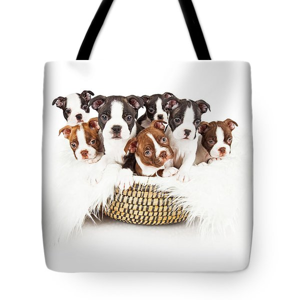 Basket Of Boston Terrier Puppies Tote Bag