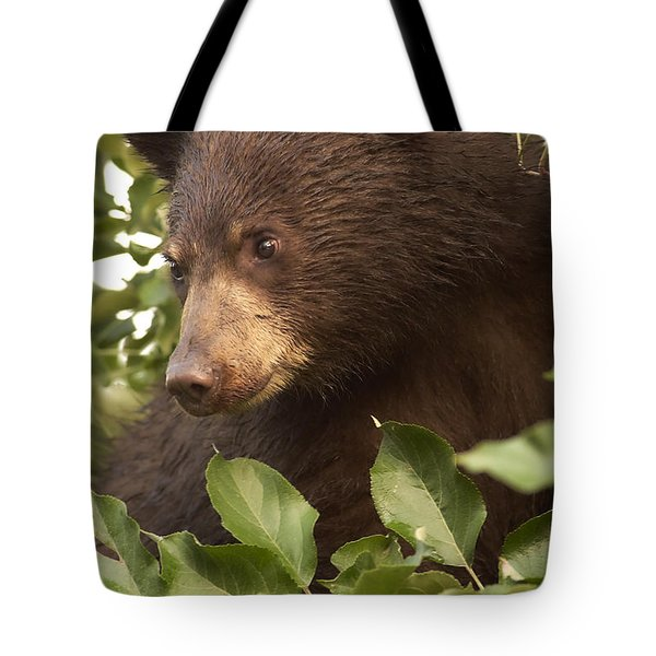Bear Cub In Apple Tree1 Tote Bag by Loni Collins