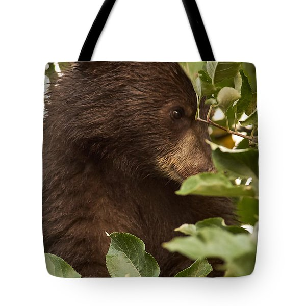 Bear Cub In Apple Tree3 Tote Bag by Loni Collins