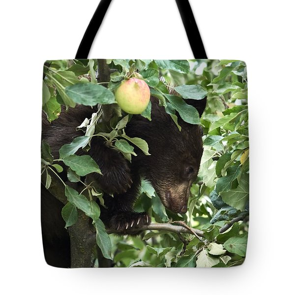 Bear Cub In Apple Tree5 Tote Bag by Loni Collins