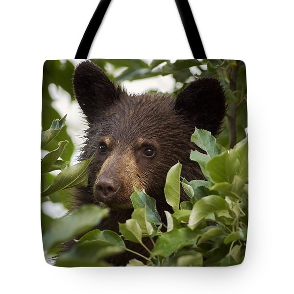 Bear Cub In Apple Tree6 Tote Bag by Loni Collins