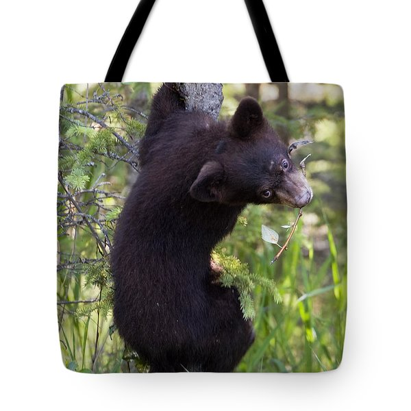 Bear Cub On Tree Tote Bag